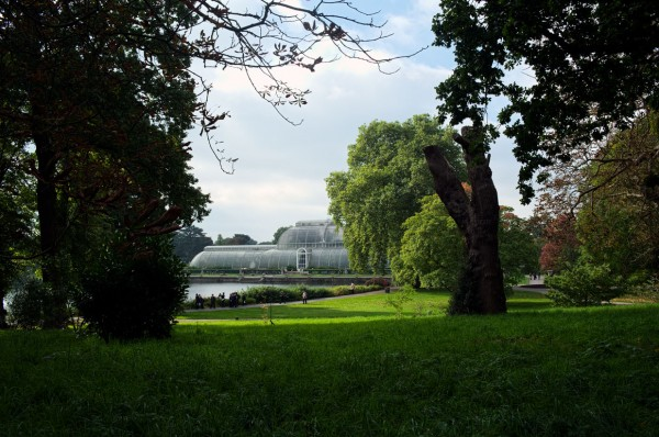 The Palm House at Kew Gardens.  (Click image to enlarge)